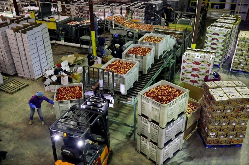 أسعار المنتجين الأمريكية تنكمش على غير المتوقع في يونيو بفعل تكاليف الغذاء